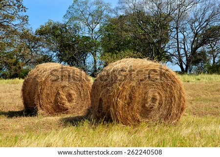 Two hay bales in a pasture field - stock photo