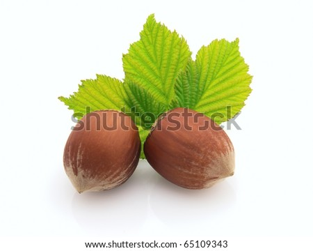 Two hazelnuts with leaves