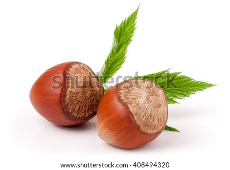 Two hazelnuts with leaves isolated on white background close-up