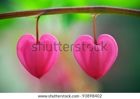 Two heart flower. Conceptual design. - stock photo