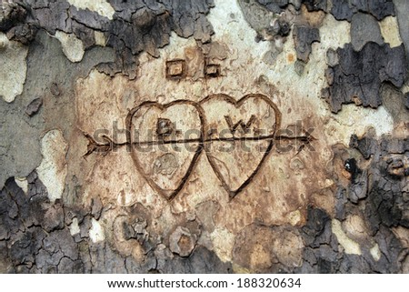 Two hearts with initials carved in tree bark - stock photo