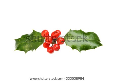 Two holly leaves with many red berries isolated against white - stock photo