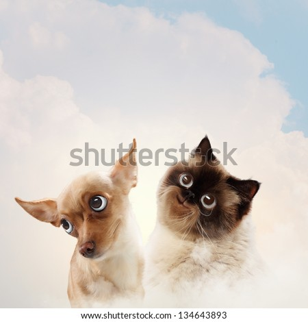 Two home pets next to each other on a light background. funny collage