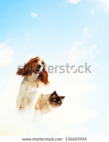 Two home pets next to each other on a light background. funny collage - stock photo