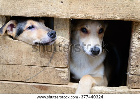 two homeless puppy in a shelter for dogs - stock photo