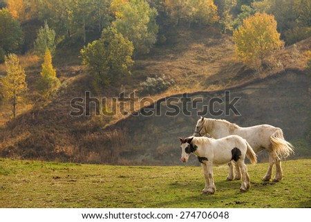 Two horse on a green field with trees in background - stock photo