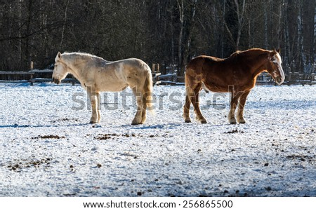 Two horses bask in the bright winter-spring sun, sinking pleasure. Spring is coming - stock photo