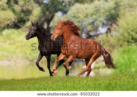 two horses galloping in the meadow - stock photo