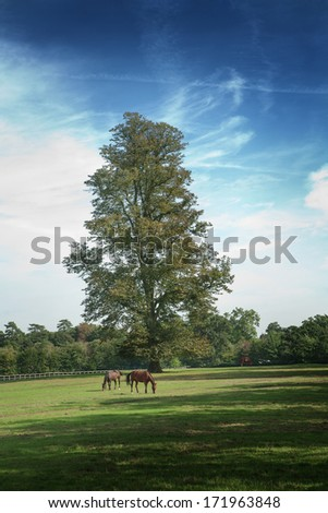 Two horses grazing in a field beneath a tree, England - stock photo