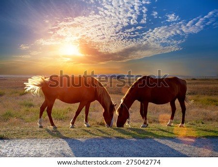 two horses grazing in the meadow at sunset  - stock photo