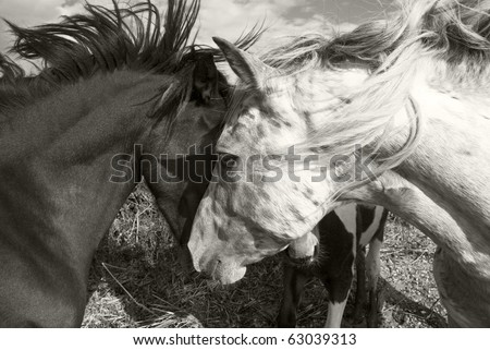 Two horses greeting each other - stock photo