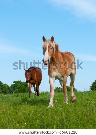 Two horses in a lush spring pasture against blue sky - stock photo