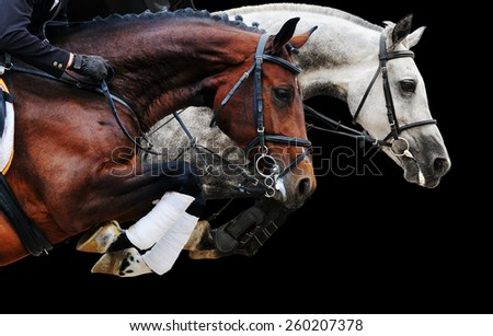 Two horses in jumping show, on black background isolated - stock photo