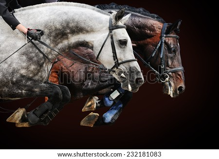 Two horses in jumping show, on brown background with gradient