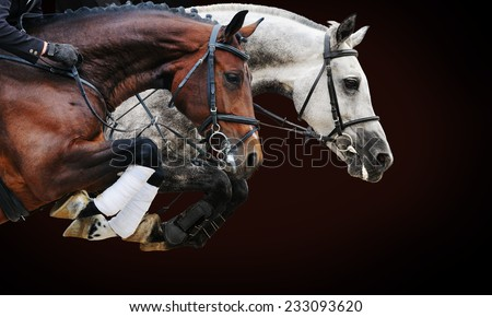 Two horses in jumping show, on brown background with gradient - stock photo