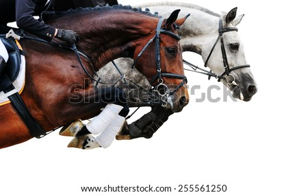 Two horses in jumping show, on white background isolated - stock photo