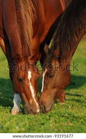 Two horses in pasture