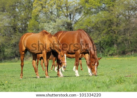 Two horses in spring pasture