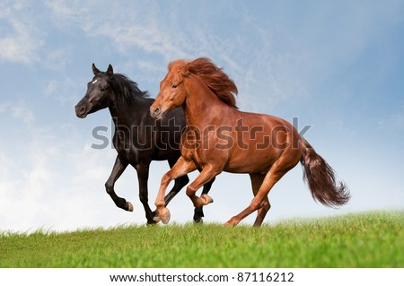 two horses in summer field - stock photo