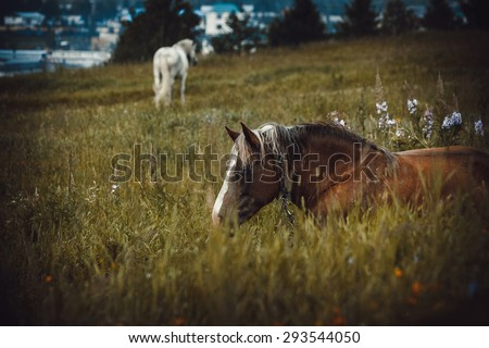 Two horses in the field - stock photo