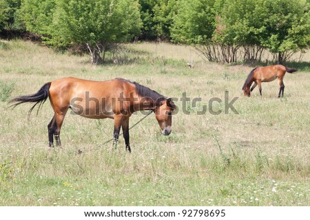 two horses in the meadow