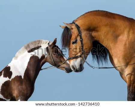 Two horses on blue background. - stock photo