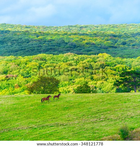Two horses on the green field under blue sky with clouds  - stock photo