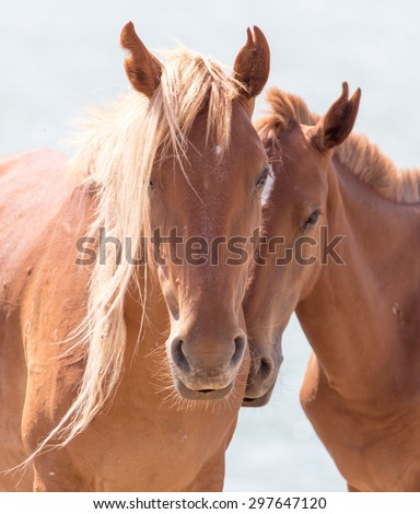 two horses on the nature - stock photo