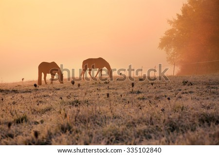Two horses on wonderful autumn meadow during calm morning sunrise near by colored misty forest in november