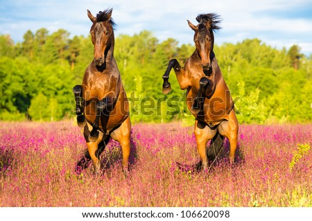 Two horses play on the pink flowers in summer time - stock photo