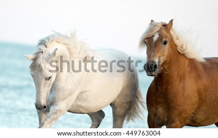 two horses portrait with blue sea behind