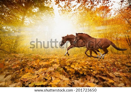 Two horses running in autumn forest, picture for chinese year of horse 2014 - stock photo