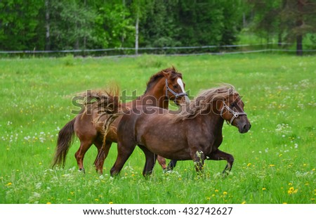 Two horses running on meadow
