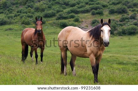 Two Horses Standing in Green Meadow - stock photo