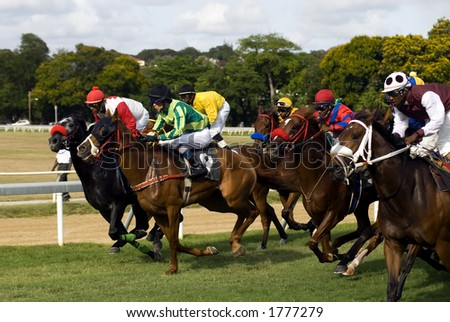 Two horses vying for the lead as the rest of the pack tries to catch up. - stock photo