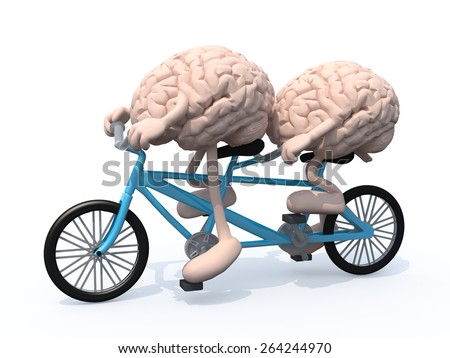 two human brains with arms and legs riding tandem bicycle, 3d illustration - stock photo