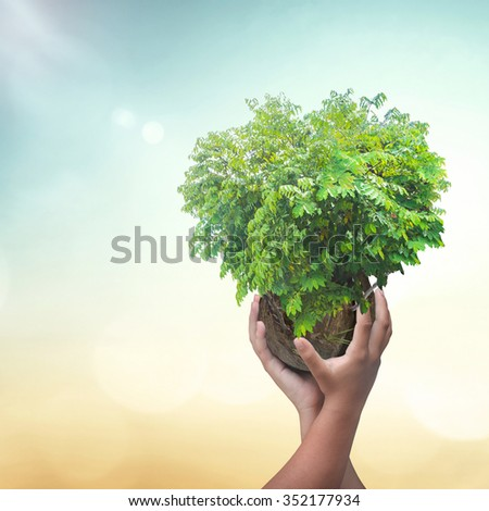 Two human hand holding heart shape of big tree big tree over blur nature background. Ecology World Environment Day Investment CSR Health Care Healthcare Life International Human Solidarity Day concept - stock photo