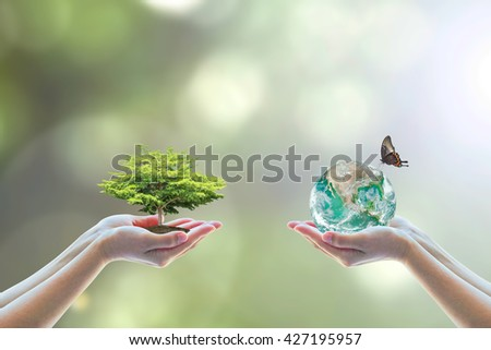 Two human hand planting perfect growing tree earth on natural background greenery Arbor reforestation conservation csr esg peace campaign World environment day Element of this image furnished by NASA