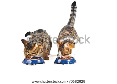 two hungry cats have their meal