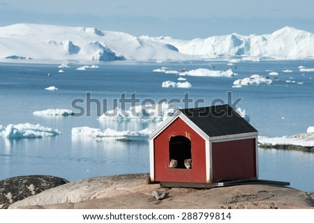 Two Husky puppies in small house,Ilulissat, Greenland - stock photo