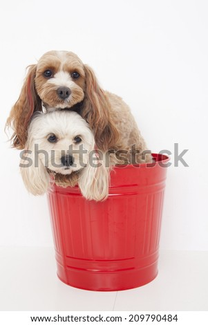 Two Hybrids In The Bucket