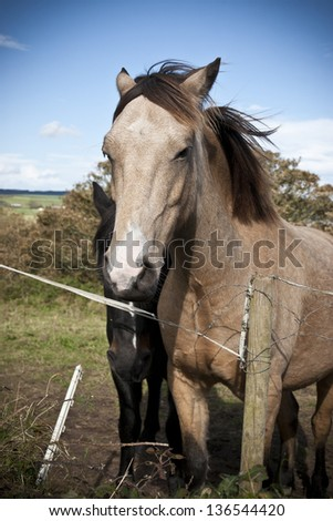 two Irish horses in the beautiful Ardmore countryside of county Waterford Ireland - stock photo
