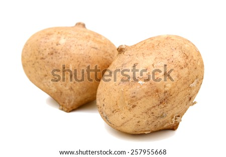 two jicamas isolated on white  - stock photo