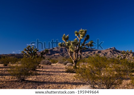 Two Joshua trees in the Utah Joshua Forest - stock photo