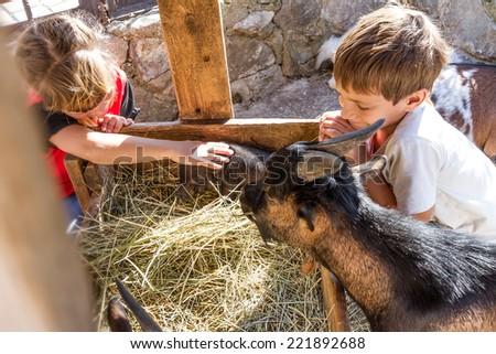 two kids - boy and girl - taking care of domestic animals on farm - stock photo