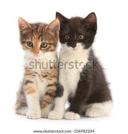 Two kitten sitting isolated on white - stock photo