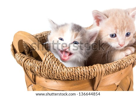 Two kittens in a basket - stock photo