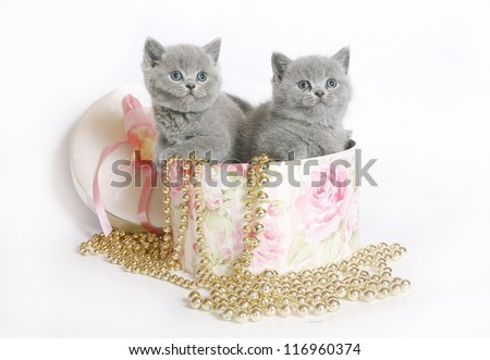 Two kittens in a box with a beads - stock photo