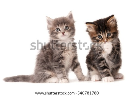 Two kittens isolated on white