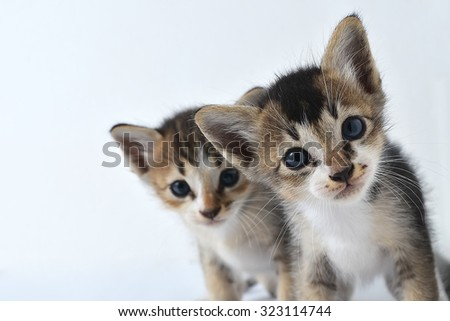 Two kittens isolated white background - stock photo